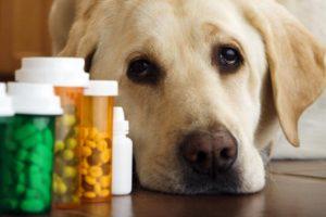 Какие пивные дрожжи выбрать для собак