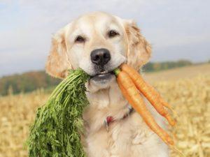 Какие витамины лучше для беременных собак