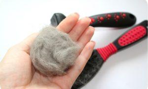 Какие витамины лучше для кошек от выпадения шерсти