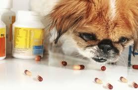 Какие витамины выбрать для собак крупных и мелких пород