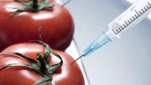 Что такое ГМО и в чем их вред