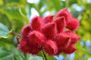 Что такое краситель аннато, и в чем его вред
