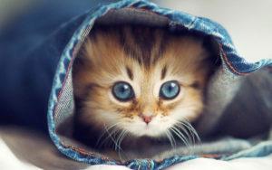 Какие витамины лучше для котов и их иммунитета