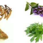 Природный состав препарата Вирекс